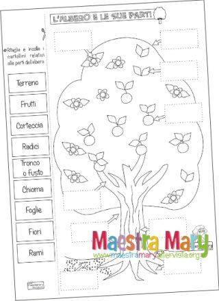 Schede Didattiche Di Scienze Maestra Mary